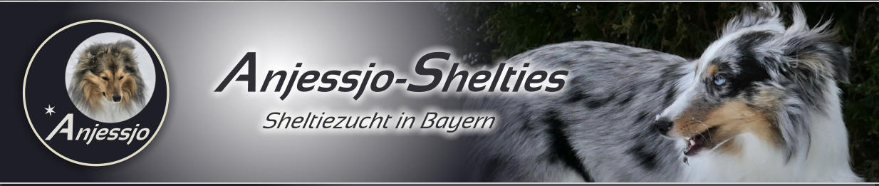 Anjessjo-Shelties Sheltiezucht in Bayern Anjessjo